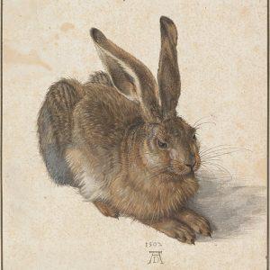 Durer Le Lièvre 1502